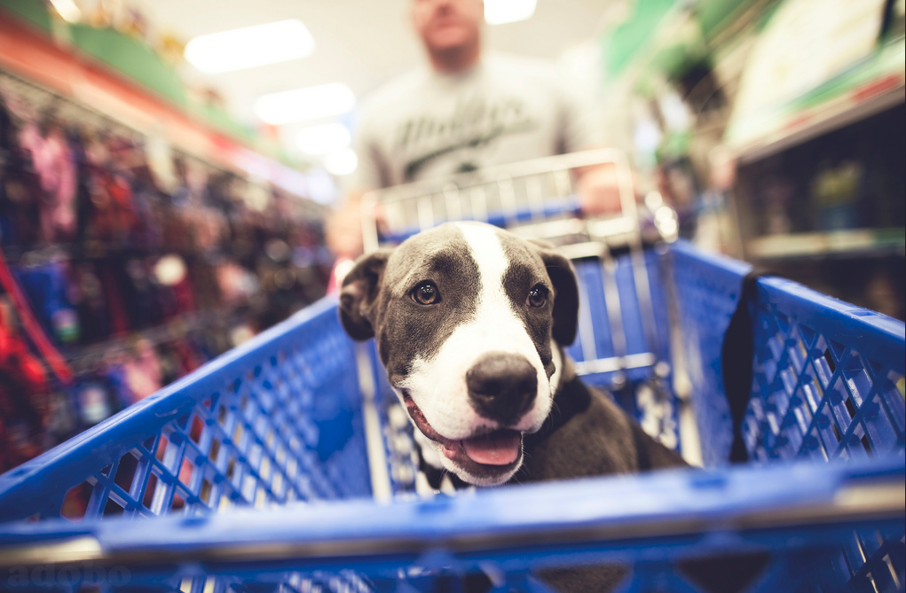 10 Local Dog-Friendly Stores