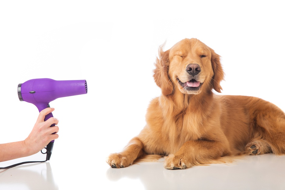 Why Groom? 3 Reasons To Get Your Dog Groomed Regularly
